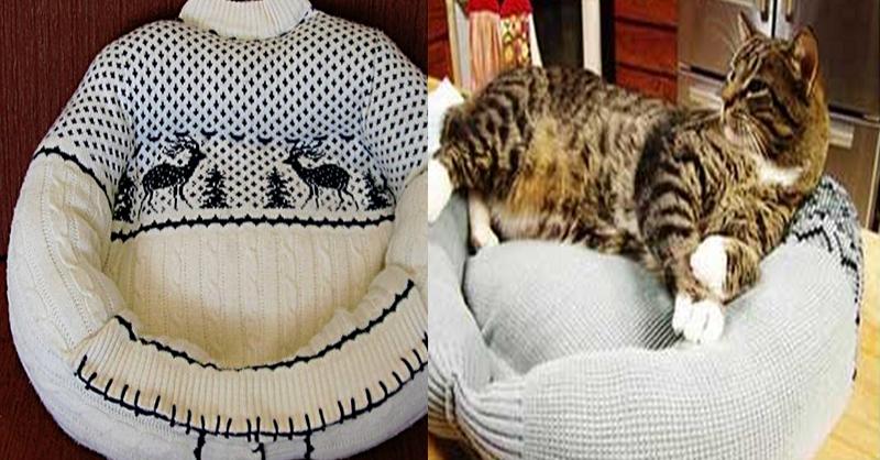 Come creare la cuccia del tuo amico a quattro zampe - Cucina casalinga per gatti ...