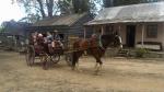 australia carro con i cavalli