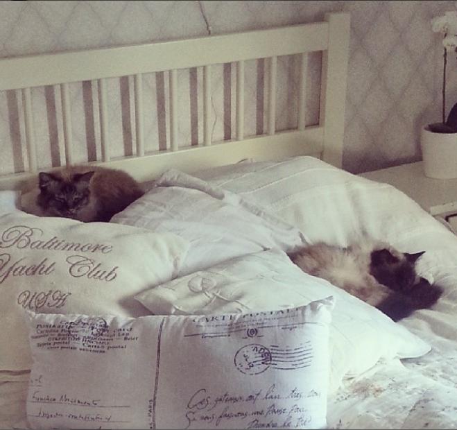casa anne gatti camera